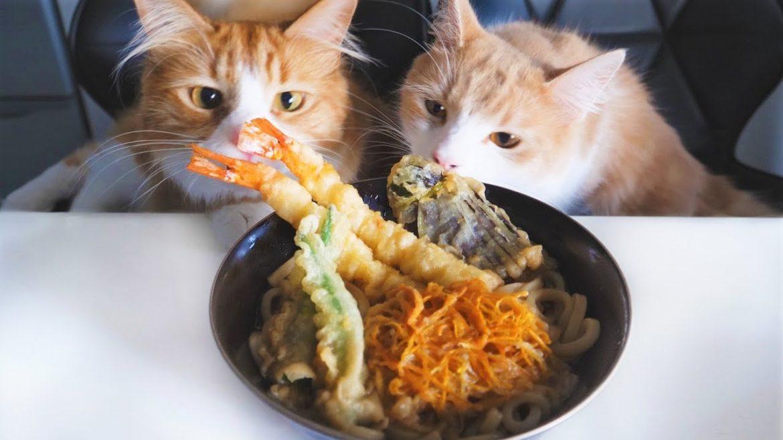 JunsKitchen Cucina giapponese fatta in casa